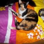 Rafaela- 6 meses-04/2012