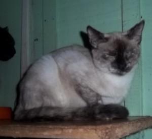 Nicole- 6 meses- 05/2012