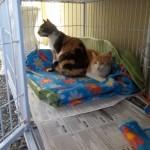 Rafaela e Rafael - melhor ficar aqui, este cobertor tá maior.