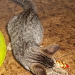 Tigrinha fofa - adotada em 7/2013