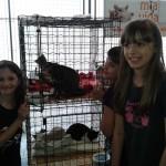 As meninas e os gatinhos