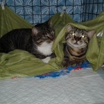 Mami e Mini - Adotadas juntas