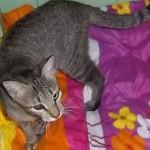Manoela- 6 meses- 04/2012