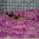 Kaschi e MIra- adotadas juntas